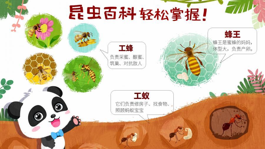 奇妙昆虫世界
