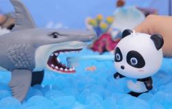 鲨鱼找朋友